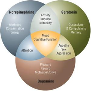 nuerotransmitters